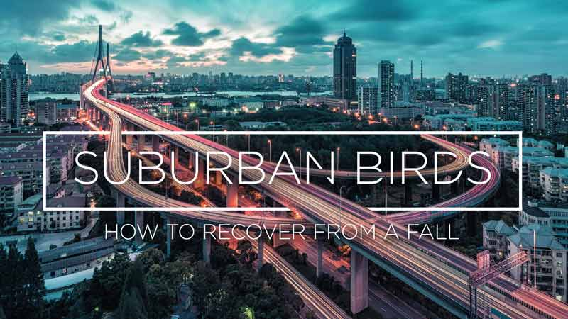 Audio file of Steve McKinney's message: How to Recover From a Fall, the second message in the Suburban Birds series