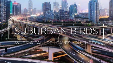 Suburban Birds 4: When a Failure Leaves You Empty