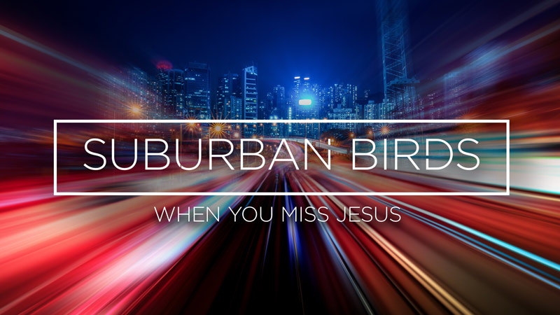 Suburban Birds 6: When You Meet Jesus