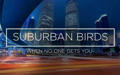 Suburban Birds 7: When No One Gets You