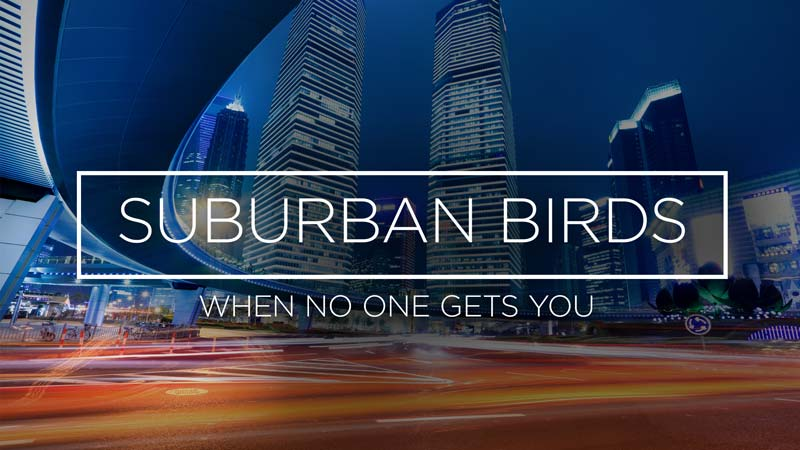 Suburban Birds 7: When No One Gets You