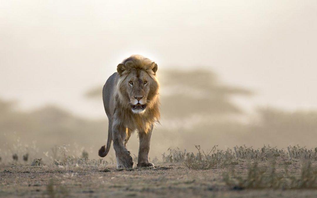 Prophets, Liars & Lions